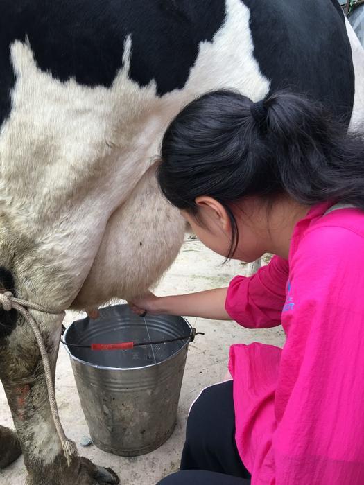 挤牛奶.png